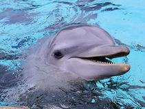 O frasco cheirou o golfinho fotografia de stock