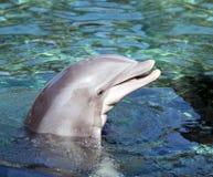 O frasco cheirou o sorriso do golfinho fotos de stock