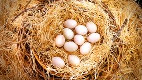 O ` fresco s do pato Eggs na cesta do monte de feno na exploração agrícola Imagens de Stock Royalty Free