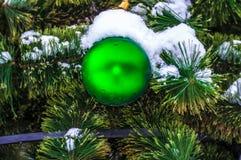 O frio pequeno do abeto no inverno Imagens de Stock Royalty Free