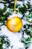 O frio pequeno do abeto no inverno Imagem de Stock Royalty Free