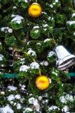 O frio pequeno do abeto no inverno Fotos de Stock Royalty Free