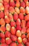 O fruto de baga vermelho da morango é colocado Imagens de Stock Royalty Free