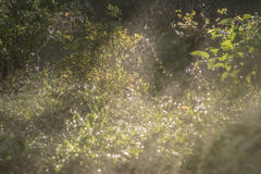 O fulgor brilhante do ` s do sol irradia delicadamente iluminando a grama, Imagens de Stock
