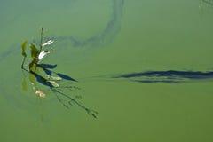 O fulgor da água de florescência Fotografia de Stock