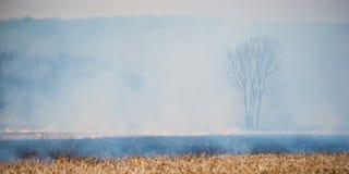O fumo encobre uma árvore enquanto o incêndio se queima em torno dele. Fotos de Stock Royalty Free