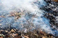 O fumo sae da folha seca Fotografia de Stock