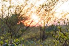 O fundo abstrato da árvore do ramo da natureza no por do sol e a lente alargam-se imagem de stock royalty free