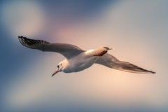 O fundo abstrato da cor da gaivota do voo Imagem de Stock Royalty Free