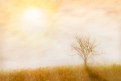 O fundo abstrato da natureza feito com os filtros de cor no colo macio Foto de Stock