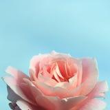 O fundo azul delicado com um cor-de-rosa aumentou Imagem de Stock
