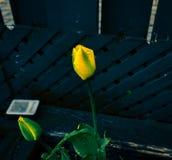O fundo azul o mais bonito com flores amarelas fotos de stock