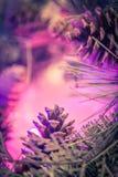 O fundo bonito do Natal com agulhas do pinho e os cones do pinho fecham-se acima Imagens de Stock Royalty Free