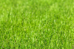 O fundo colheu uma grama verde Foto de Stock Royalty Free