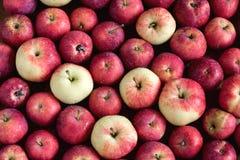 O fundo com as maçãs pequenas bonitas do fundo de madeira pequeno das maçãs colhe a opinião superior do fundo Fotografia de Stock