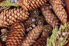 O fundo com os cones do abeto vermelho e do pinho, bagas de zimbro, thuja ramifica Imagens de Stock