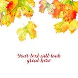 O fundo com a vinha alaranjada dourada do outono sae isolado em branco, caindo de cima de Ilustração da aguarela ilustração stock