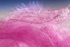 O fundo cor-de-rosa abstrato com uma pena do ` s do pássaro com água deixa cair fotografia de stock
