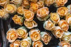 O fundo cor-de-rosa da laranja, close-up dos muitos cor pastel coloriu rosas Imagem de Stock Royalty Free