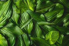 O fundo criativo fez as folhas verdes imagens de stock royalty free