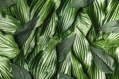 O fundo criativo fez as folhas verdes fotografia de stock