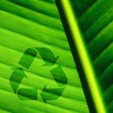 O fundo da folha da palmeira e recicl o logotipo Fotografia de Stock Royalty Free