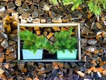 O fundo da madeira Imagem de Stock