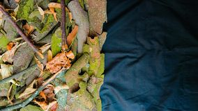 O fundo da natureza sae, ramos e casca de árvore fotos de stock royalty free