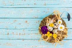 O fundo da Páscoa com ninho, ovos e mola floresce na luz - madeira azul com espaço da cópia Fotografia de Stock Royalty Free