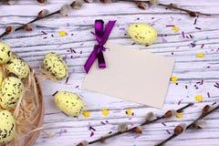 O fundo da Páscoa com o salgueiro de bichano amarelo dos ovos da páscoa ramifica fita e espaço roxos para o texto Imagens de Stock Royalty Free