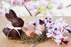 O fundo da Páscoa, o cartão com ovos da páscoa, o coelho do chocolate e a mola cor-de-rosa florescem Imagens de Stock Royalty Free