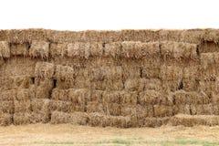 O fundo da palha, parede do cubo do bloco da palha, palha seca, feno da pilha da fileira isolou o fundo branco, palha para a vaca Fotos de Stock