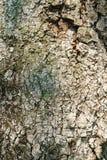 O fundo da textura do teste padrão da casca de árvore, madeira velha rachou a textura b Imagens de Stock Royalty Free