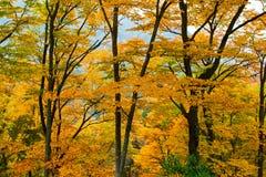 O fundo das folhas de outono Fotografia de Stock