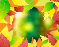 O fundo das folhas de outono Vetor Imagens de Stock Royalty Free