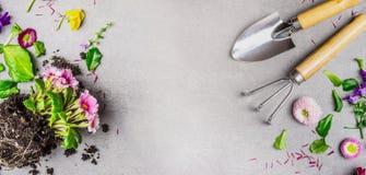 O fundo de jardinagem com jardim entrega a planta das ferramentas e das flores do verão no fundo de pedra cinzento Imagem de Stock Royalty Free