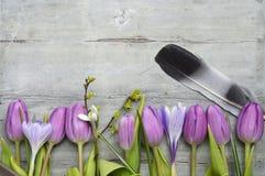 O fundo de madeira cinzento com as tulipas brancas roxas, o snowdrop e o açafrão limitam em seguido e espaço vazio da cópia, deco Foto de Stock Royalty Free