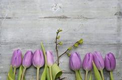 O fundo de madeira cinzento velho com as tulipas brancas roxas, o snowdrop e o açafrão limitam em seguido e espaço vazio da cópia Fotografia de Stock