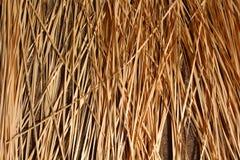 O fundo do bambu seco Imagens de Stock