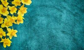 O fundo do feriado com amarelo floresce narcisos amarelos Fotografia de Stock