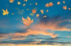 O fundo do inverno do outono sae do tempo do vento Imagens de Stock
