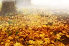 O fundo do outono com amarelo sae da névoa das árvores da perspectiva Fotos de Stock Royalty Free