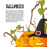 O fundo do outono de Dia das Bruxas com três abóboras isoalted no whit Imagens de Stock