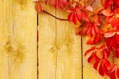 O fundo do outono, vermelho sae da textura de madeira foto de stock