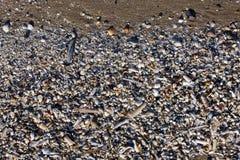 O fundo do shell de Pebble Beach à opinião pequena da textura muitos lixa a luz azul branca do sol Fotografia de Stock