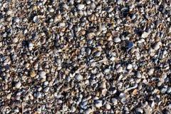 O fundo do shell de Pebble Beach à opinião pequena da textura muitos lixa a luz azul branca do sol Imagens de Stock Royalty Free