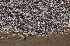 O fundo do shell de Pebble Beach à opinião pequena da textura muitos lixa a luz azul branca do sol Imagem de Stock