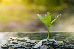 O fundo do verde da árvore do crescimento com claySeedlings pretos plantado no vidro com economias inventa Ideias das economias imagem de stock royalty free
