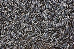 O fundo dos peixes pequenos. Fotografia de Stock