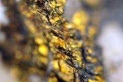 O fundo dourado para você projeta a gema macro da foto Imagem de Stock